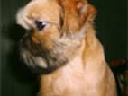 Собаки, щенята Брюссельський гріффон, ціна 5000 Грн., Фото