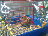 Гризуни Різне, ціна 400 Грн., Фото