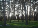 Земля и участки Днепропетровская область, цена 100 Грн., Фото