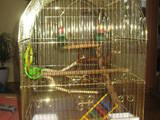 Попугаи и птицы Клетки  и аксессуары, цена 300 Грн., Фото