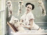 Собаки, щенята Ветеринарні послуги, Фото