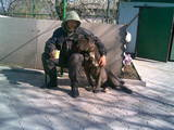 Собаки, щенки Мастино неаполетано, цена 3000 Грн., Фото