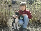 Собаки, щенки Басенджи, цена 6000 Грн., Фото