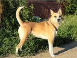 Собаки, щенята Безпорідна, ціна 20 Грн., Фото