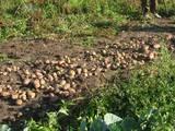 Дачи и огороды Полтавская область, цена 10 Грн., Фото