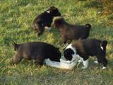 Животные Разное, цена 200 Грн., Фото