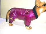 Тварини Різне, ціна 160 Грн., Фото