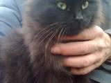 Кошки, котята Турецкая ангора, цена 10 Грн., Фото