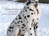 Собаки, щенки Далматин, цена 3500 Грн., Фото