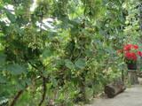 Дачи и огороды Одесская область, цена 280000 Грн., Фото