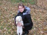 Собаки, щенята Той-пудель, Фото