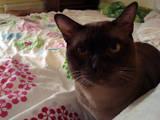 Кошки, котята Спаривание, Фото