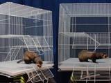 Грызуны Клетки  и аксессуары, Фото