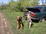 Собаки, щенки Эрдельтерьер, цена 2500 Грн., Фото