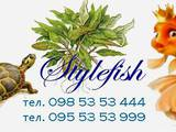Рибки, акваріуми Установка і догляд, ціна 99 Грн., Фото