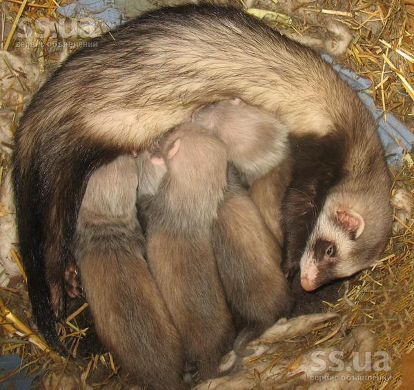 Тварини екзотичні тварини ціна 600 грн