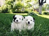Собаки, щенята Безпорідна, ціна 50 Грн., Фото