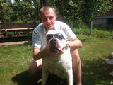 Собаки, щенки Американский бульдог, цена 10 Грн., Фото