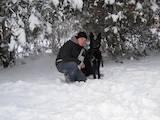 Собаки, щенята Німецька вівчарка, ціна 600 Грн., Фото