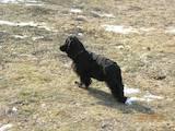 Собаки, щенята Притулки і готелі, ціна 5 Грн., Фото