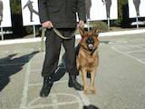 Собаки, щенки Занятия, тренировки, цена 1500 Грн., Фото