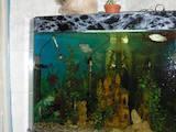 Рибки, акваріуми Акваріуми і устаткування, ціна 1200 Грн., Фото