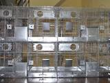 Гризуни Клітки та аксесуари, ціна 310 Грн., Фото