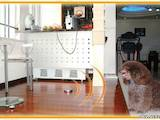 Собаки, щенки Занятия, тренировки, цена 457 Грн., Фото