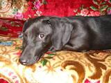 Собаки, щенята Притулки і готелі, ціна 500 Грн., Фото