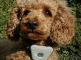 Собаки, щенки Аксессуары, цена 60 Грн., Фото