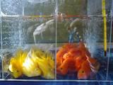 Рибки, акваріуми Рибки, ціна 3 Грн., Фото