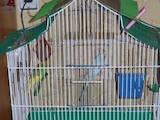 Папуги й птахи Клітки та аксесуари, ціна 70 Грн., Фото