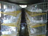 Гризуни Клітки та аксесуари, ціна 1200 Грн., Фото