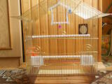 Папуги й птахи Клітки та аксесуари, ціна 150 Грн., Фото