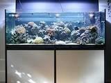 Рибки, акваріуми Акваріуми і устаткування, Фото