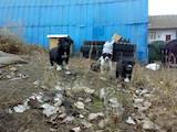 Собаки, щенята Безпорідна, ціна 5 Грн., Фото