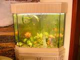 Рибки, акваріуми Акваріуми і устаткування, ціна 1800 Грн., Фото