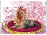 Собаки, щенята Послуги перукаря, миття, ціна 150 Грн., Фото