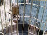Папуги й птахи Клітки та аксесуари, ціна 1600 Грн., Фото