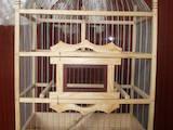 Животные Разное, цена 15 Грн., Фото