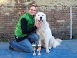 Собаки, щенята Польська підхаланська вівчарка, ціна 4800 Грн., Фото