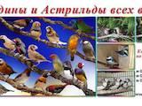 Попугаи и птицы Разное, цена 35 Грн., Фото