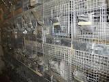 Гризуни Клітки та аксесуари, ціна 200 Грн., Фото