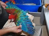 Попугаи и птицы Попугаи, цена 2400 Грн., Фото