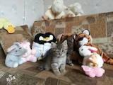 Кішки, кошенята Різне, ціна 0.10 Грн., Фото
