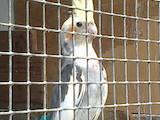 Папуги й птахи Папуги, ціна 1200 Грн., Фото