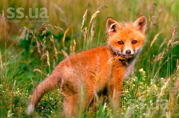 Тварини екзотичні тварини ціна 1000 грн