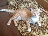 Кішки, кошенята Спаровування, Фото