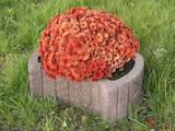 Будматеріали Брущатка, ціна 50 Грн., Фото
