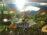 Рибки, акваріуми Рибки, Фото